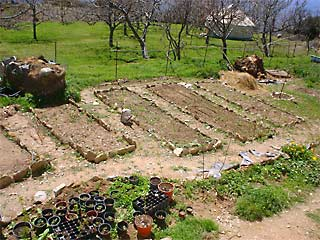 A vegetable plot with orchard and yurt in the background