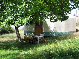 Yurt in the trees at the retreat accommodation